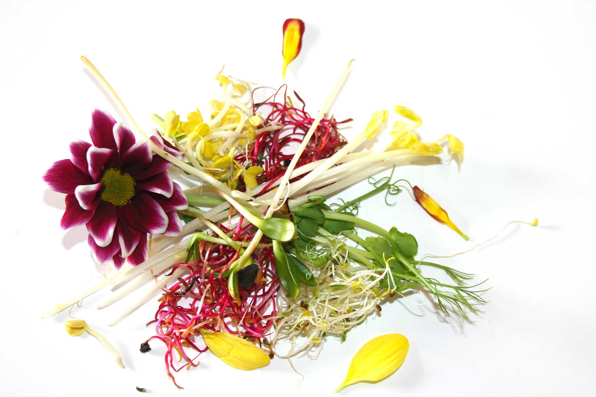 fiori eduli e germogli elitaria vendita prodotti alta qualità per la ristorazione