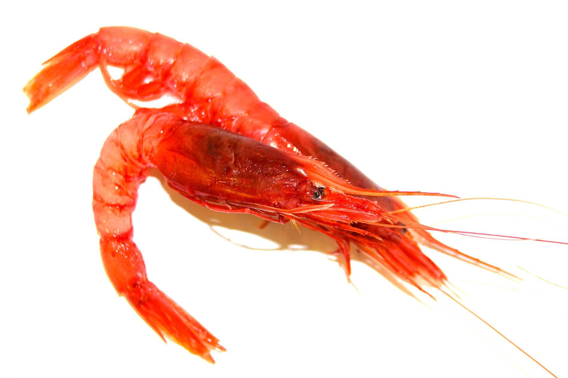 gambero rosso mazzara del vallo elitaria vendita prodotti alta qualità per la ristorazione